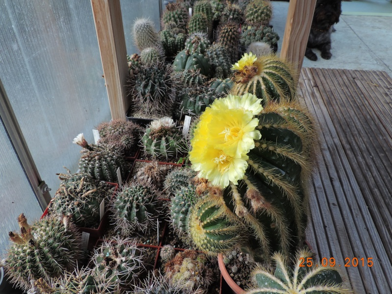 Cacti and Sukkulent in Köln, every day new flowers in the greenhouse Part 131 Bild_276