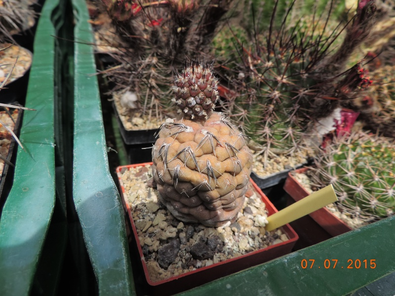 Cacti and Sukkulent in Köln, every day new flowers in the greenhouse Part 131 Bild_285
