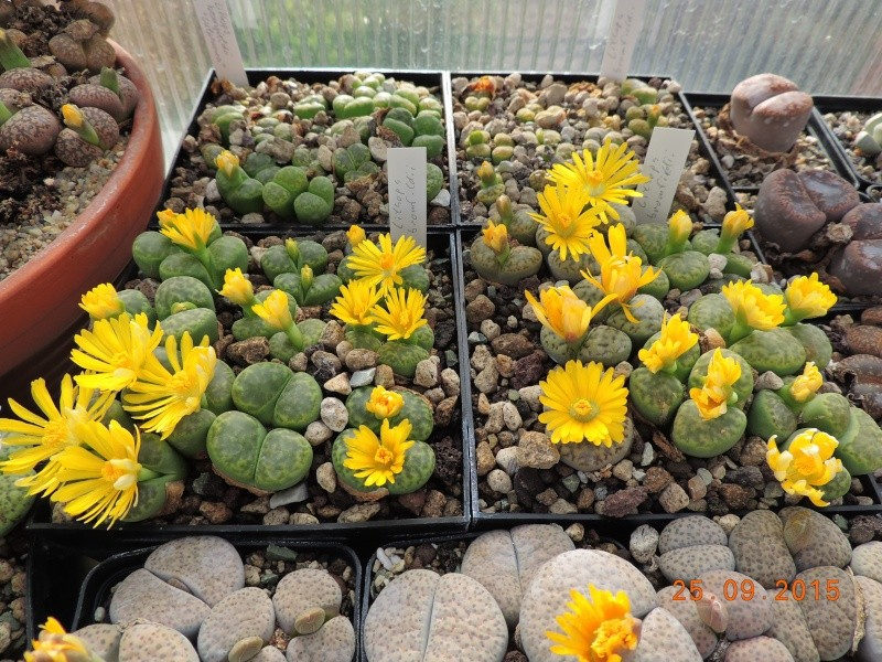 Cacti and Sukkulent in Köln, every day new flowers in the greenhouse Part 131 Bild_288
