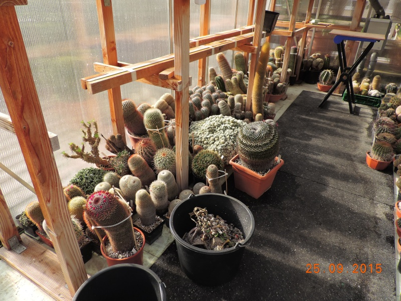 Cacti and Sukkulent in Köln, every day new flowers in the greenhouse Part 131 Bild_295
