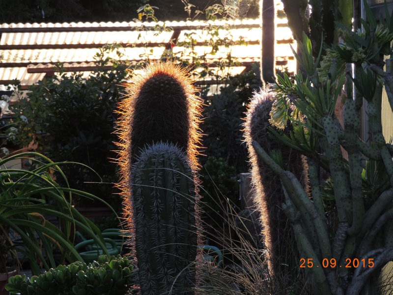 Cacti and Sukkulent in Köln, every day new flowers in the greenhouse Part 131 Bild_296