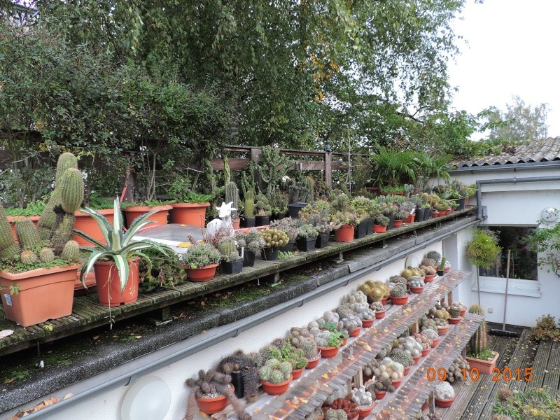 Cacti and Sukkulent in Köln, every day new flowers in the greenhouse Part 131 Bild_323