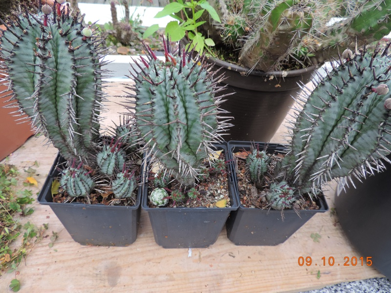 Cacti and Sukkulent in Köln, every day new flowers in the greenhouse Part 131 Bild_325