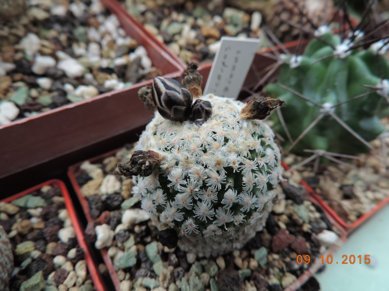 Cacti and Sukkulent in Köln, every day new flowers in the greenhouse Part 131 Bild_345