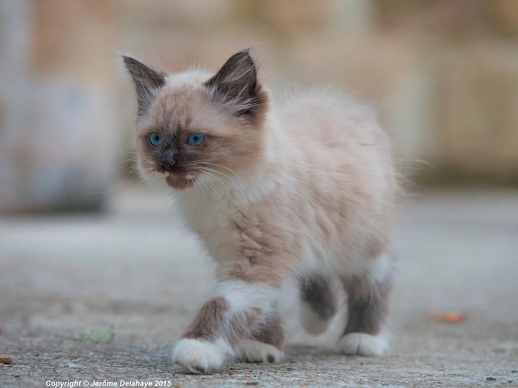 J'ai repéré ce soir un chat Sans_t17