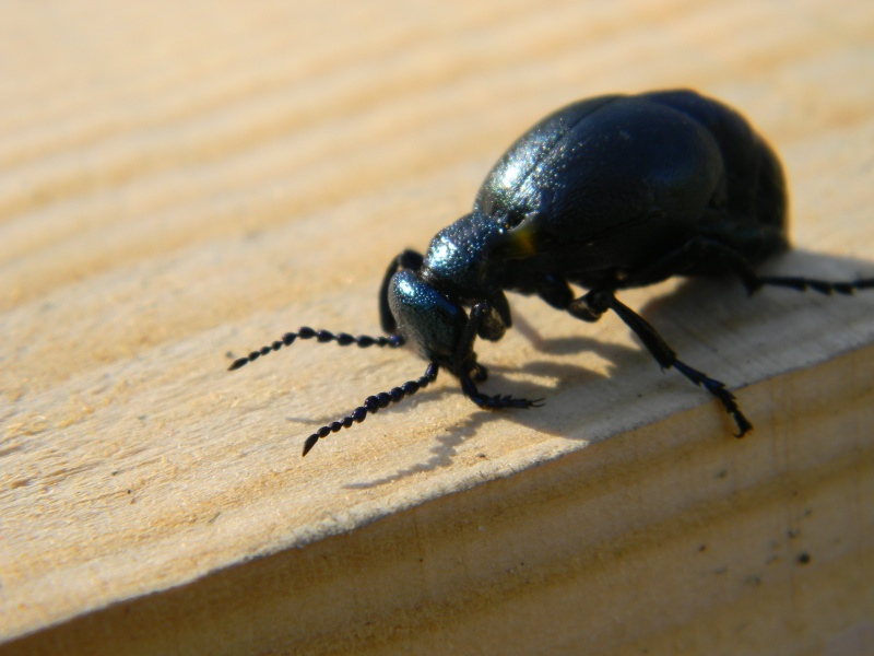 gros insectes Dscn2210