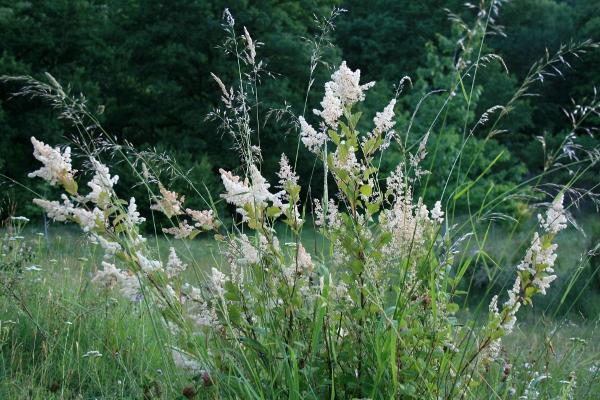 floraisons des arbres et des arbustes - Page 4 Img_0017