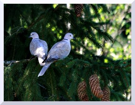 Oiseaux de printemps Img_9413