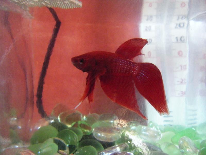 Deux petits poissons. Dscf7511