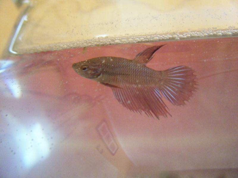 Deux petits poissons. Dscf7512