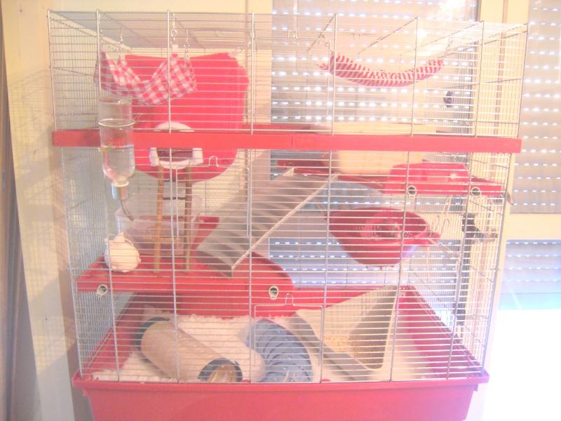 Photos de vos cages - Page 5 Dscn2718