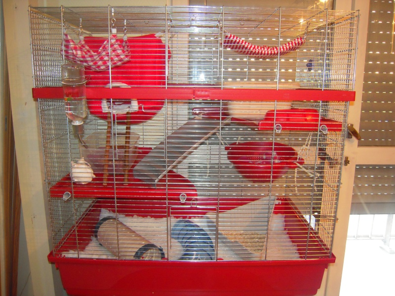Photos de vos cages - Page 5 Dscn2719