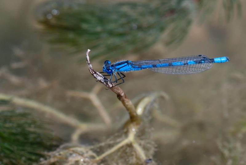 Photos de la Rencontre Macro Papillons & Libellules du Sud 2011 (21 & 22 Mai) - Page 2 Sylvia14