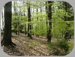Krähenwald