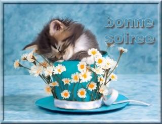 BONJOURS BONSOIRS DU MOIS D'OCTOBRE - Page 2 6017ea10