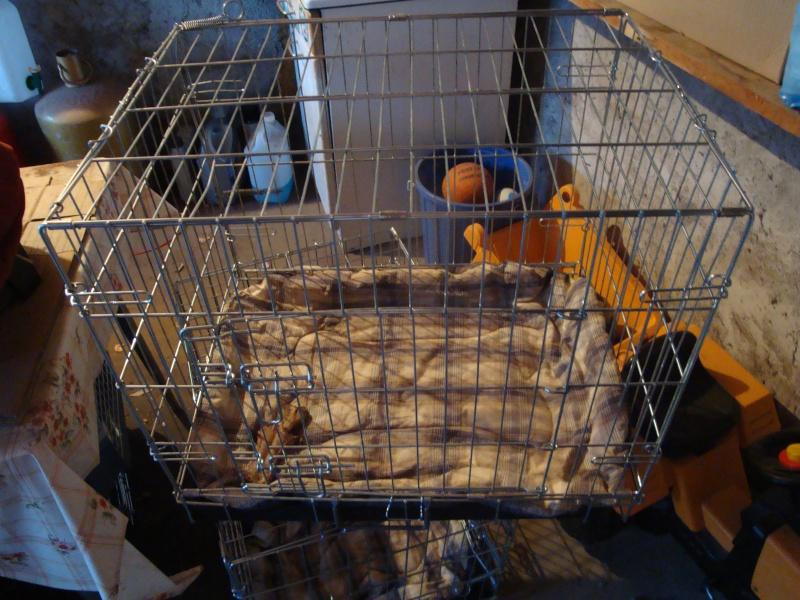 caisseS de transport chien Dsc01512
