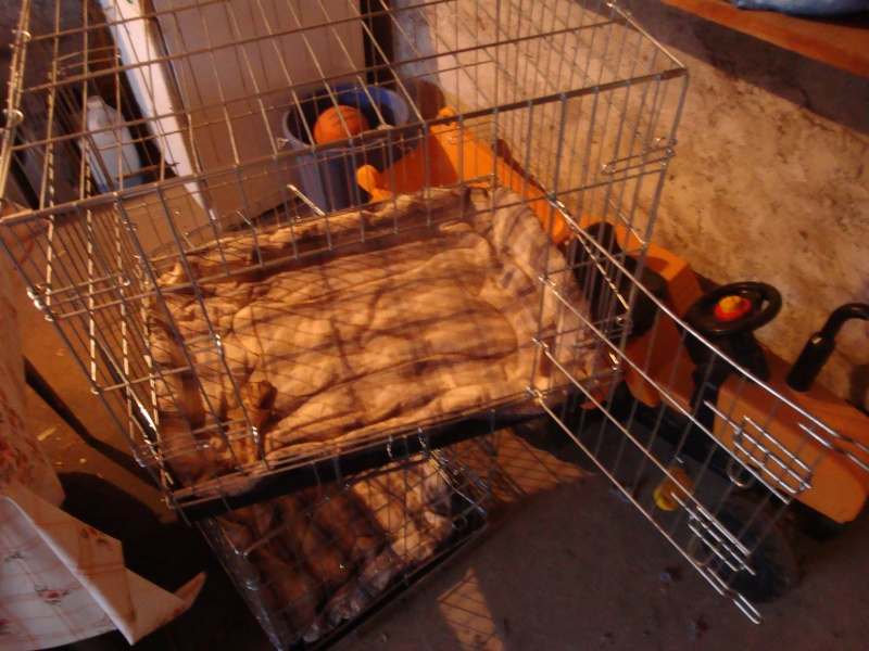 caisseS de transport chien Dsc01513