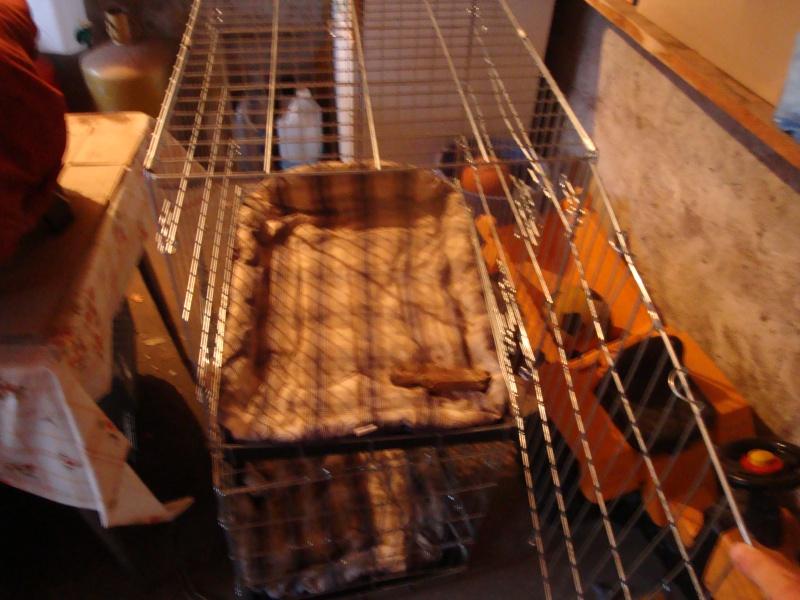 caisseS de transport chien Dsc01514
