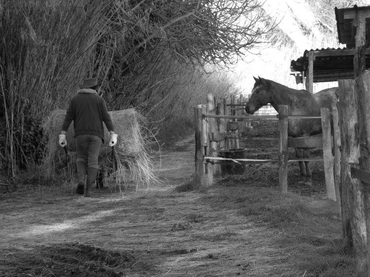 """Centre equestre western """"LA PALOUSE"""" st Cyprien 22706510"""