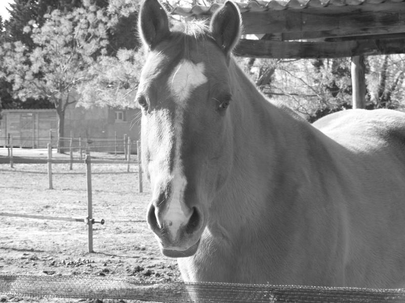 """Centre equestre western """"LA PALOUSE"""" st Cyprien Ss851111"""