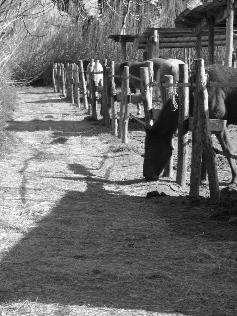 """Centre equestre western """"LA PALOUSE"""" st Cyprien Ss851112"""