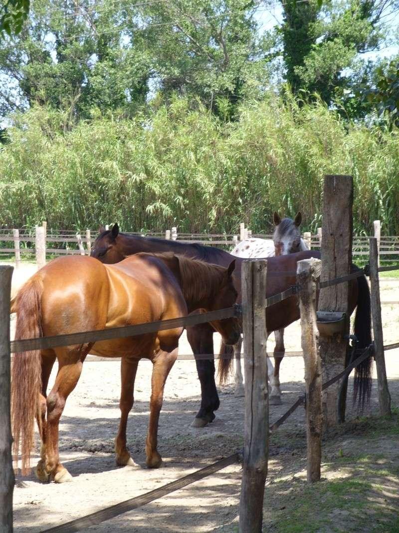 """Centre equestre western """"LA PALOUSE"""" st Cyprien Ss851518"""