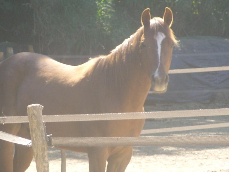 """Centre equestre western """"LA PALOUSE"""" st Cyprien Ss851522"""
