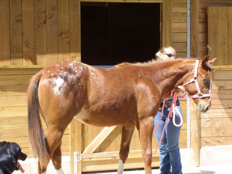 """Centre equestre western """"LA PALOUSE"""" st Cyprien Ss851523"""