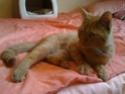 FARANDOLE - Femelle tigrée rousse de 1 an Img_0317