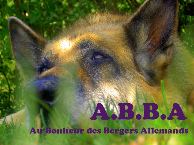 A.B.B.A
