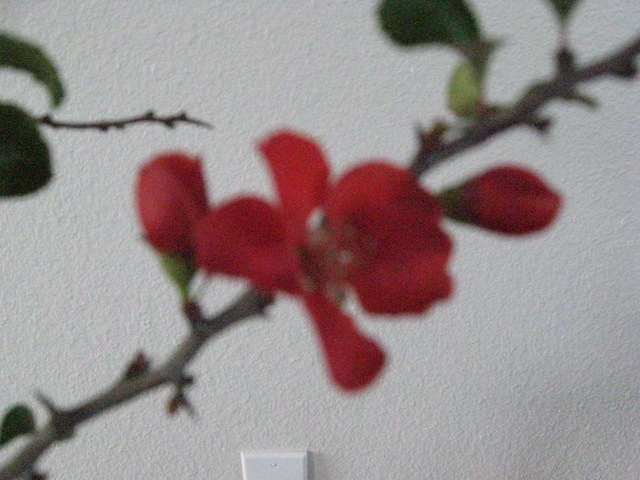 why I like quince Img_3330