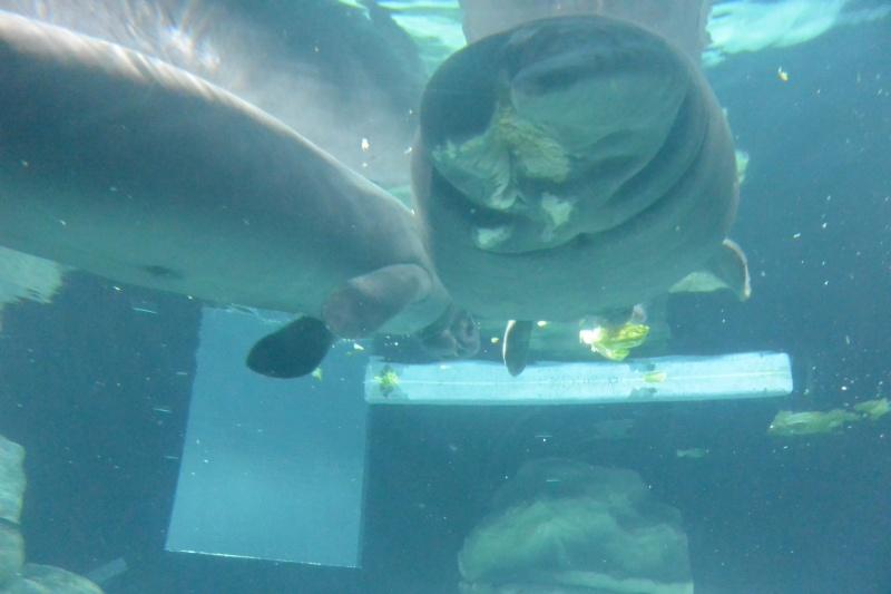 Flo et Géo découvrent la Floride et les Bahamas ! (DCL - USO - WDW) [MAJ le 26/06/16 - TR fini] - Page 10 Dsc_2115
