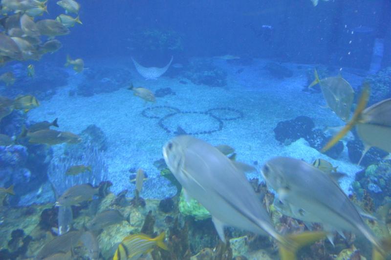 Flo et Géo découvrent la Floride et les Bahamas ! (DCL - USO - WDW) [MAJ le 26/06/16 - TR fini] - Page 10 Dsc_2121