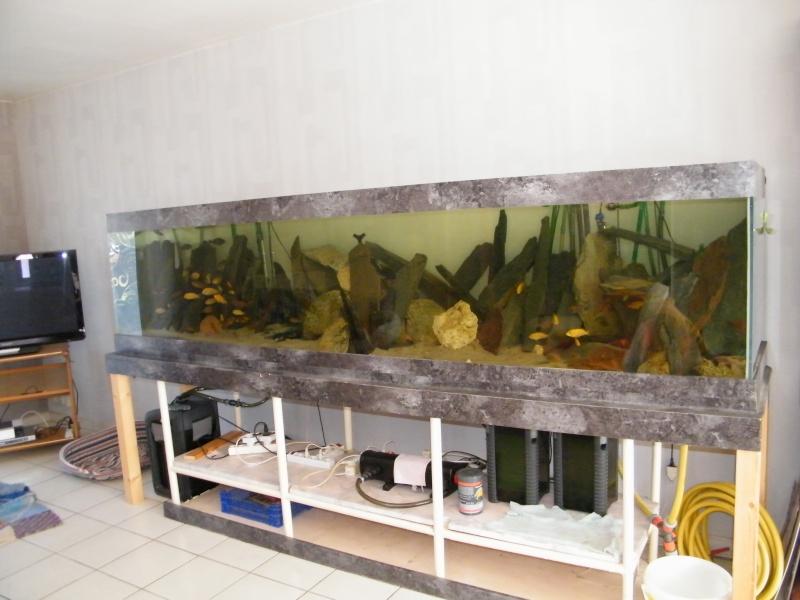 Mon petit aquarium : 1080 l. Dscf4314