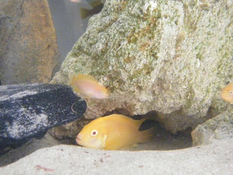 Mon petit aquarium : 1080 l. Dscf4317