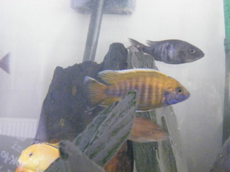 Mon petit aquarium : 1080 l. Dscf4318
