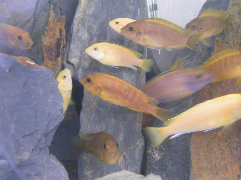 Mon petit aquarium : 1080 l. Dscf4320