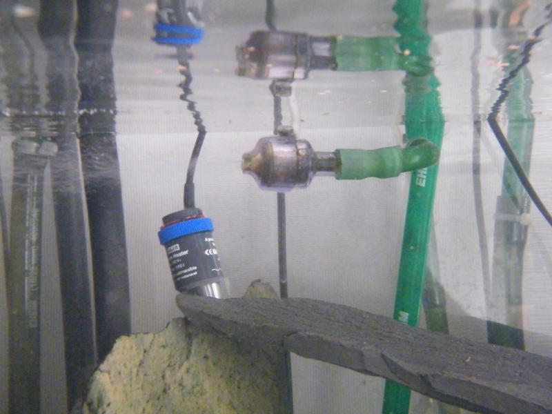 Mon petit aquarium : 1080 l. Dscf4324