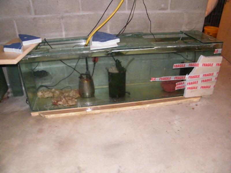 Mon petit aquarium : 1080 l. Dscf4327