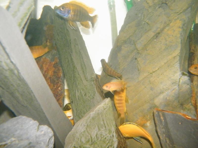 Mon petit aquarium : 1080 l. Dscf4410