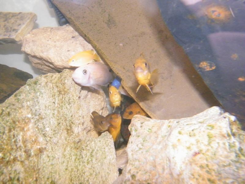 Mon petit aquarium : 1080 l. Dscf4412