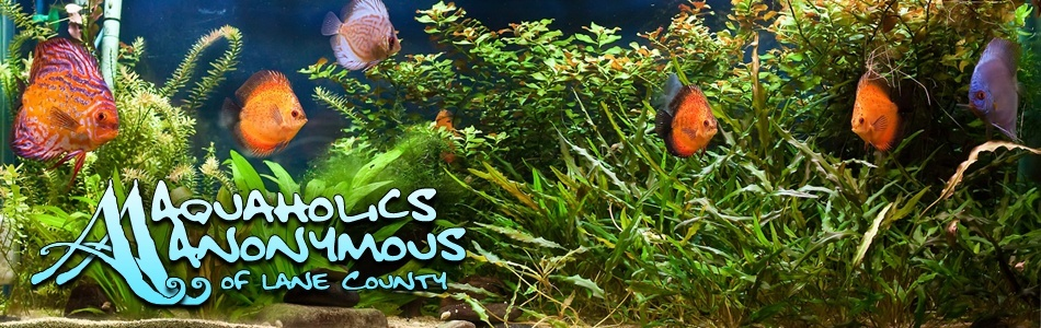 Nautilus Tropical Fish - Springfield, OR Aa_ban12