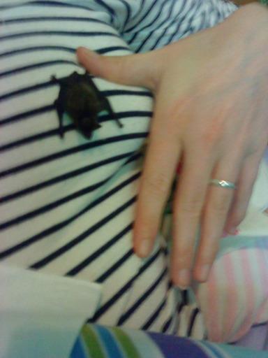 bébé chauve-souris reccueilli ce matin Dsc00210