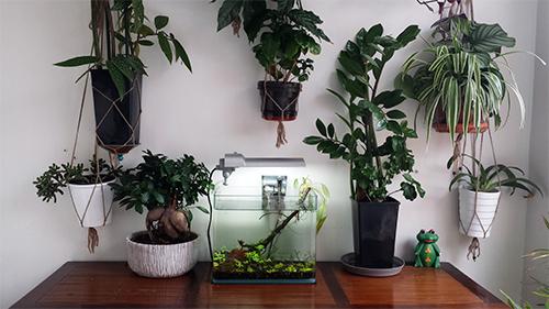 Mur végétal avec aquarium de 320L ---> Paludarium - Page 14 20151010