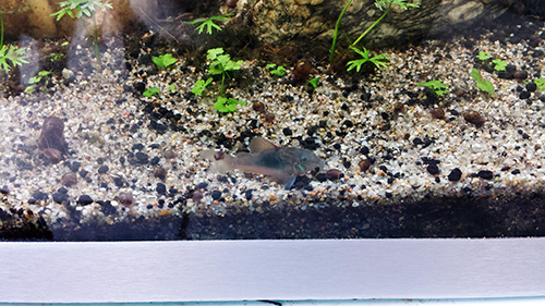 Mur végétal avec aquarium de 320L ---> Paludarium - Page 14 20151011
