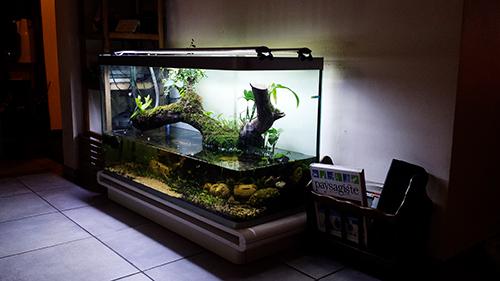 Mur végétal avec aquarium de 320L ---> Paludarium - Page 14 20151012