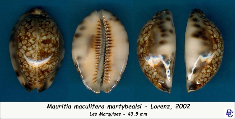 Mauritia maculifera martybealsi Lorenz, 2002 - Page 3 Maculi10