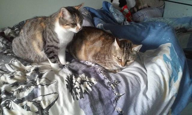 Ava tricolore et Amber tricolore et blanche - nées en 2011 e Les_fi10