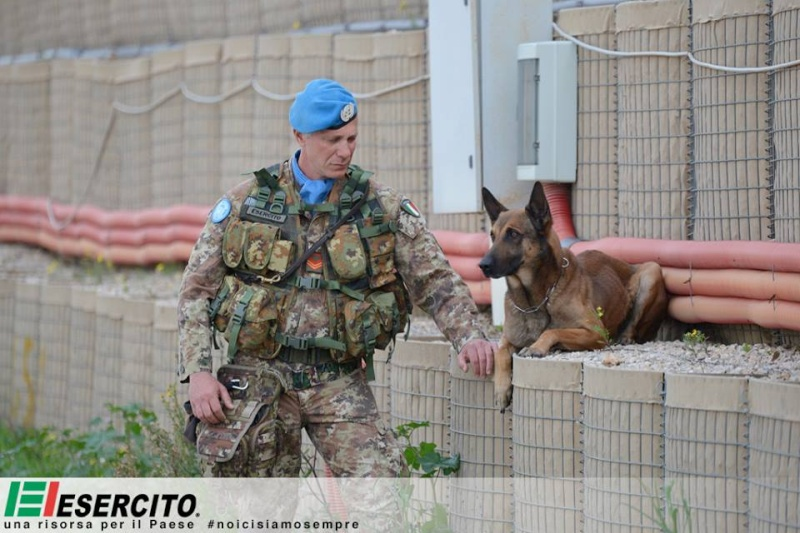 Animaux soldats - Page 5 10143