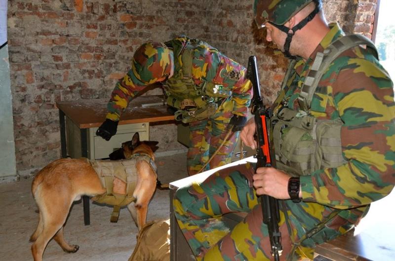 Armée Belge / Defensie van België / Belgian Army  - Page 37 1031
